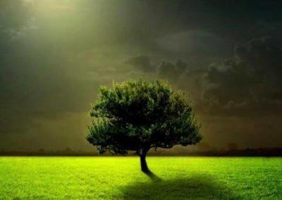 Δέντρο ALPHA OMEGA